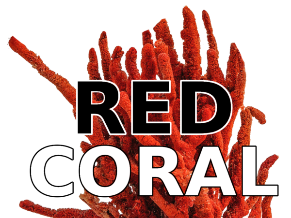 redcoral.pl